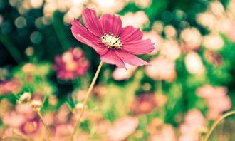 四月初桃花绽放,喜结良缘,红线牵手,相随一生永不分离的星座