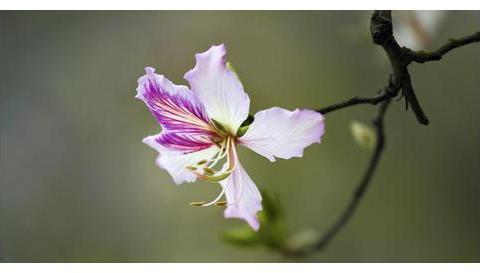 三月三十日星座日运,金牛座信心十足,双子座要处理好人际关系