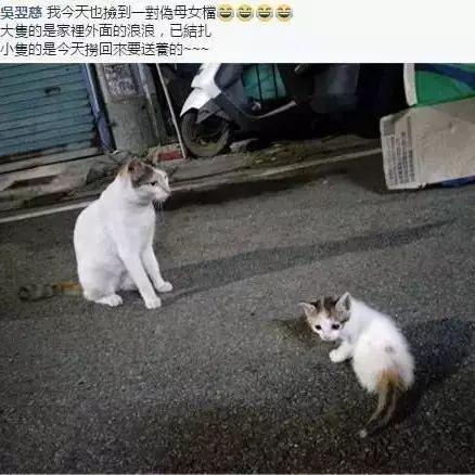 网友问捡到一只跟家里猫长一模一样的机率是多少?结果...