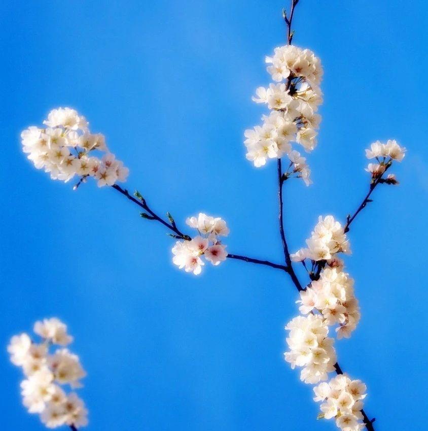 【朗诵】四月:山河无恙,愿你春风盈怀,两袖花香!