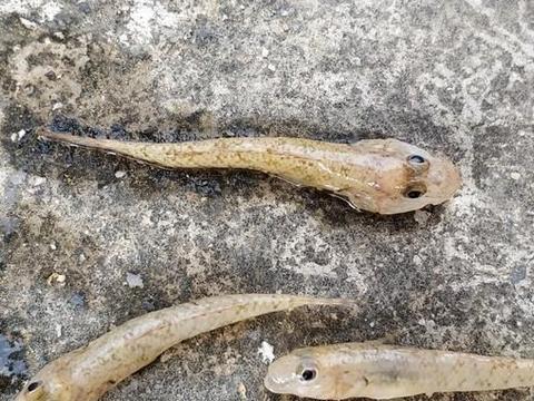 这些动物以前在小河、小溪边常见,现在越来越少,你还记得它们