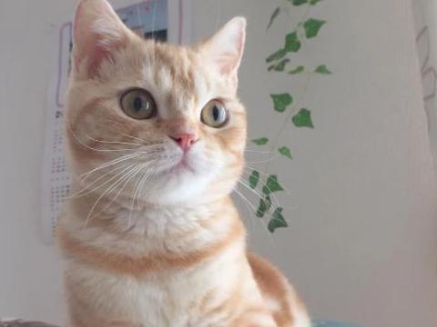 """女子晒自家""""苗条""""橘猫,却遭网友吐槽:举报,这里有人虐猫!"""