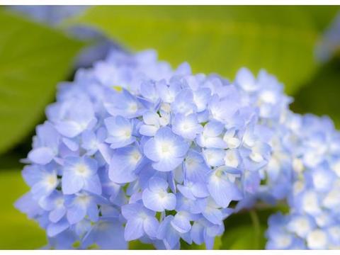 4月开始吉星庇佑,运势大爆发,桃花如雨,横财发不停的三大属相