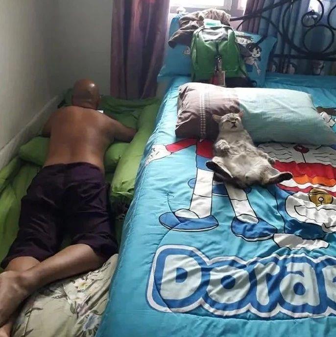 网友分享自从老爸养猫后,他本来睡床的,现在直接睡地上了!