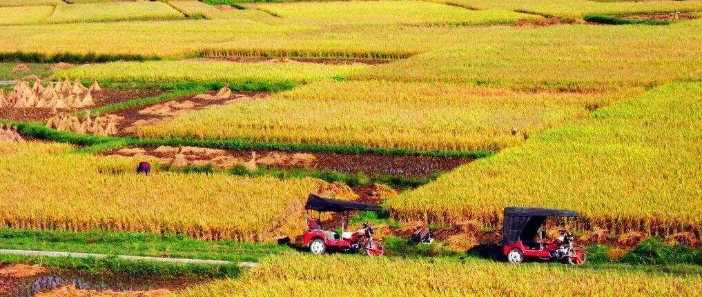 武汉市成品粮库存可以满足38天供应!三大超市承诺:不涨价、不断供