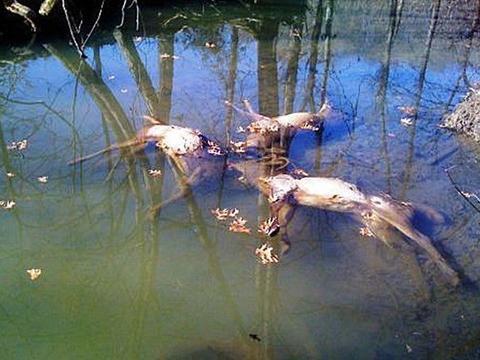 四名男子在水潭旁发现奇怪的尸体,上前细看,还得到了意外财富