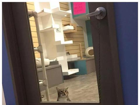 这只喵星人大佬溜门撬锁最拿手,成天带着救助站的猫一起越狱