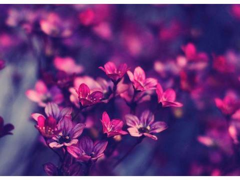 四月份,春日来临,播种下新生的种子,事业爱情双新生的星座