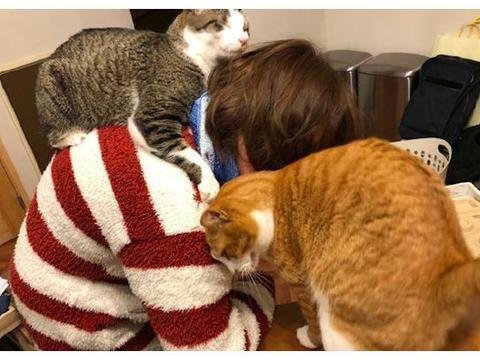主人在家办公,一只猫趴在她身上,另一只在眼前转悠,好艰难呀!
