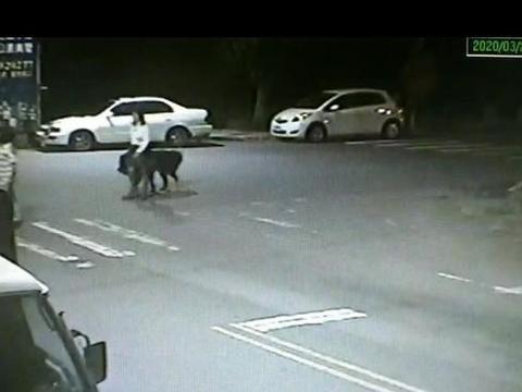 2女半夜遛犬遭醉男揶揄 两友人将男子打到脾脏破裂死亡