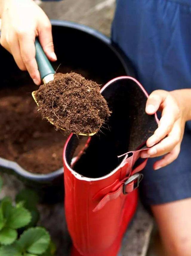 春天用了新土壤,只管换不管消毒可不行,啥花种下去都生病