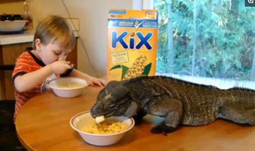 孩童大胆照料大蜥蜴,无微不至令人佩服,真相更是让人叫好!