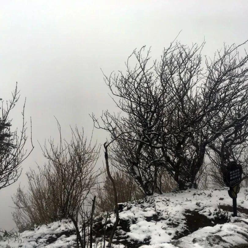 雪!今天,泰山上下雪了!一朝春雪,半梦岱宗,美哉!多图,赏雪!