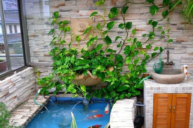"""养花高手养绿萝什么肥都不用,只用一池水把家里变成""""绿萝森林"""""""