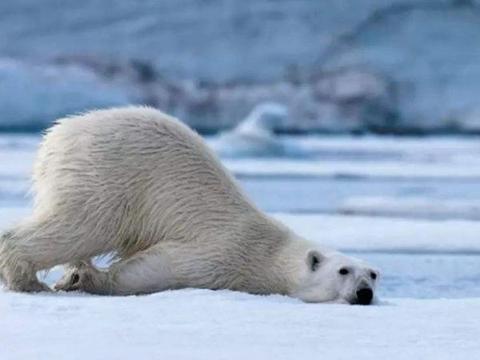全球变暖停止?科学家警告:地球将进入小冰河期,真的会发生吗?