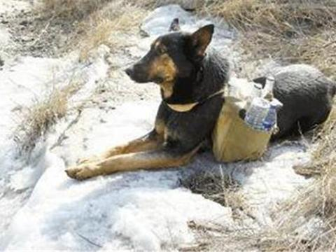 小狗每天帮残疾主人往山顶送货,游客看到它感动落泪