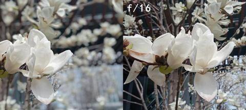 春游踏青季 这款大光圈双摄千元机轻松捕捉大自然美景