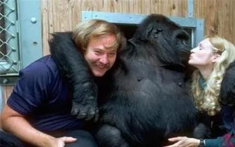 那个执意用黑猩猩人工授精的科学家,最终成功了吗