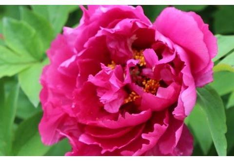 4月迎桃花,撞财运,富贵爱情双丰收,好事将近!
