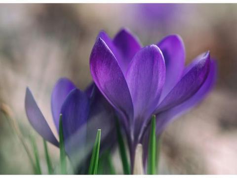 4月开始吉星照耀,财运旺盛,财富源源不断的三大生肖
