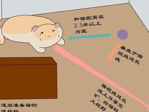 与猫的离别,每一位铲屎官都无法绕过,起码你需要了解离别周期