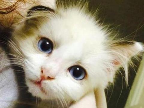 14.7%的猫已感染新冠病毒?iPhone 11降价致国产4G手机清仓