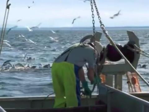 世界最牛的渔船捕鱼,渔网却拉不上来,渔民下水一看不敢动了