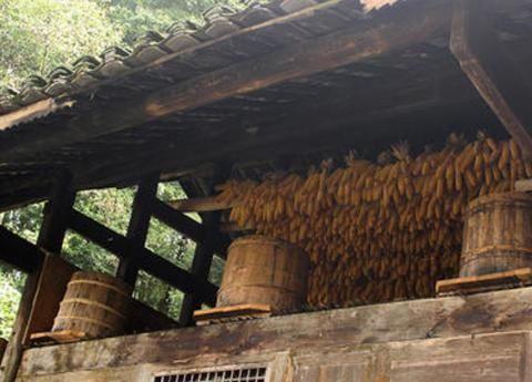 """蜜蜂分家前要""""开会"""",为何有的分蜂群会直接进入蜂箱"""