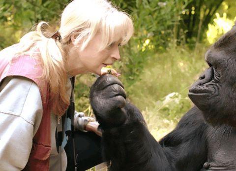"""女科学家""""献身""""猩猩,只为验证能否有后代,如今怎么样了"""