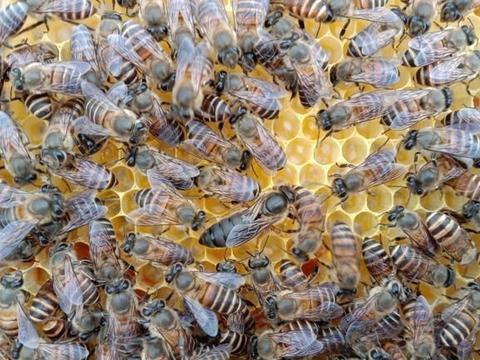 如何管理好蜂群?