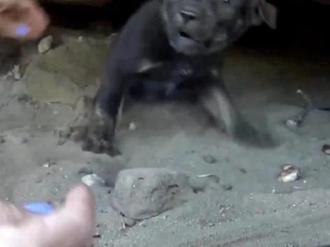 流浪奶狗躲洞穴内,看见人类嚎叫躲闪,被救后送到救助站!