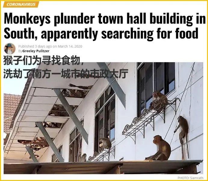 少了中国游客, 整个生态圈都乱了!
