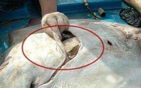 渔民海上钓上来一条大鱼, 鱼肚中发现的东西, 让人想不到