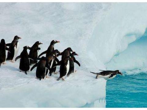 南极冰川融化,科学家发现了意外的东西,人类要提高警惕了!