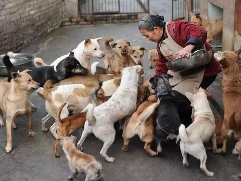 女子下班途中,看到路上躺着狗狗,原因当场想开骂!