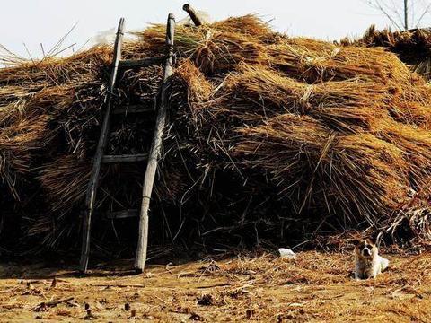 还记得农村的草垛么?小时候跟父母下地,我老躲下面的阴凉处睡觉