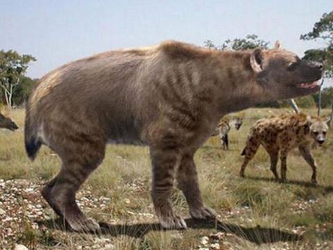 鬣狗的祖先是巨鬣狗,老虎的祖先是剑齿虎,那么狮子的祖先是什么