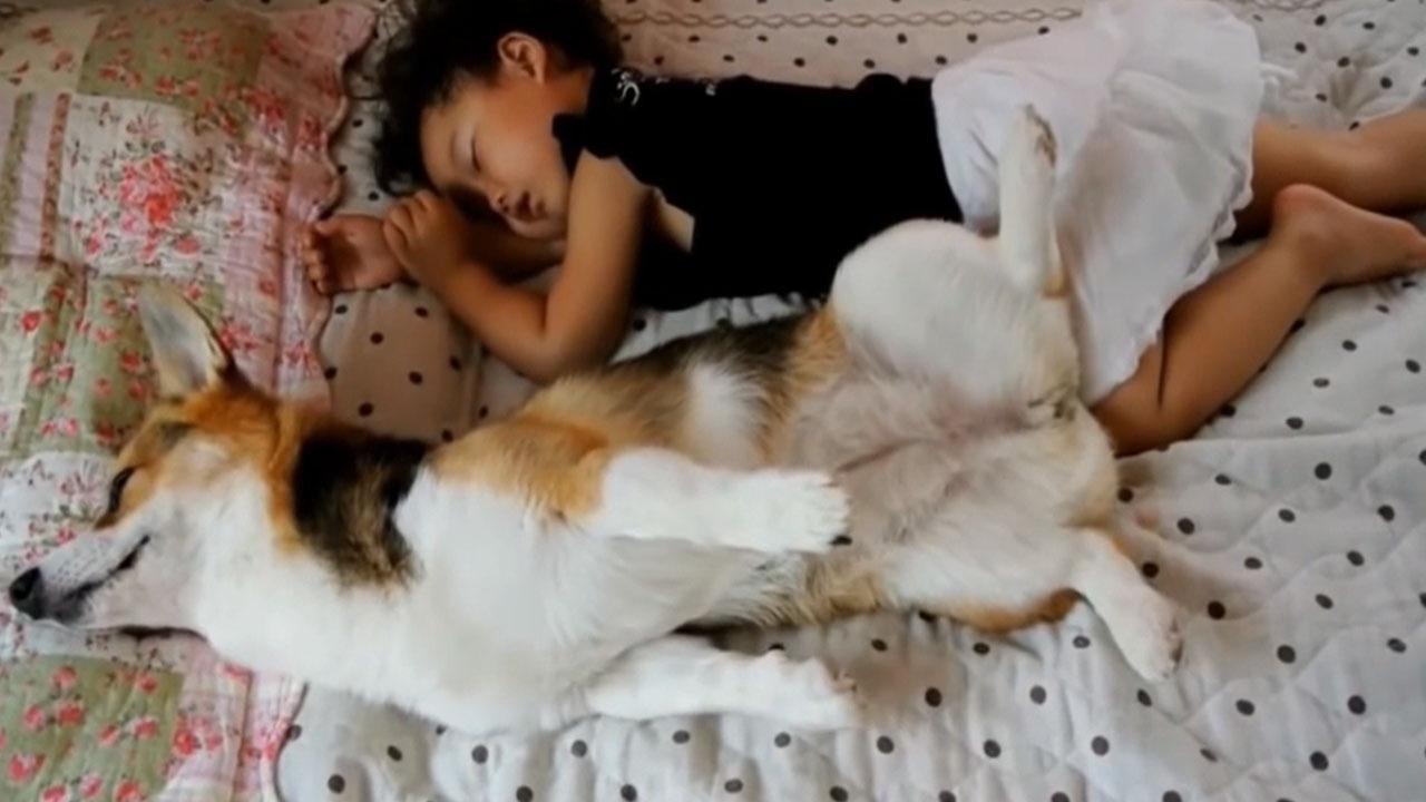 宝宝正在睡觉,两只小萌犬悄悄爬到宝宝怀里,妈妈都看愣了