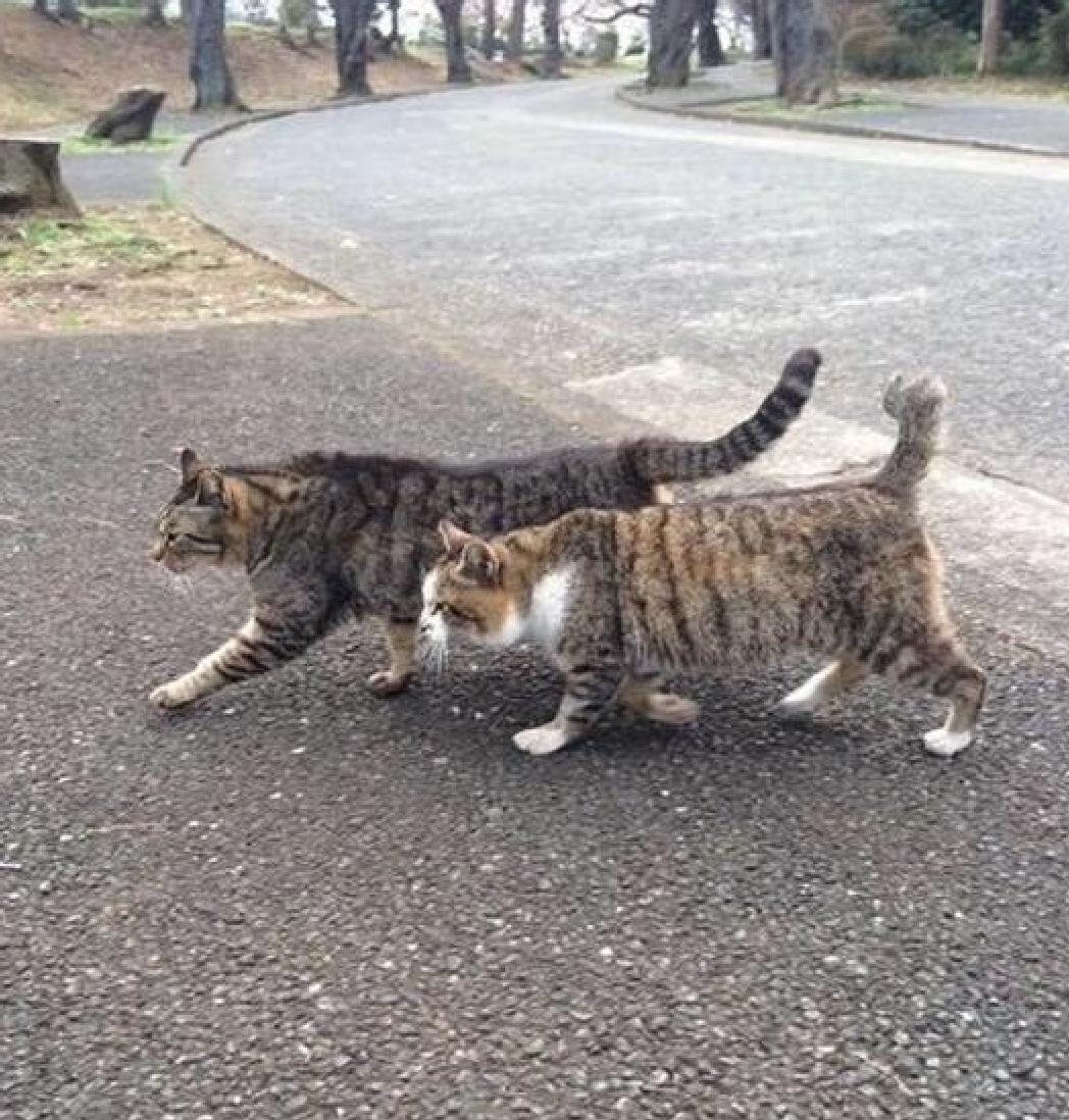 两猫当街秀恩爱,看得路边猫咪抓狂,网友:让单身喵情何以堪