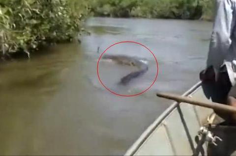 渔民捕鱼途中突遇巨型水蟒,男子船桨挑逗后,发生了吓人这幕