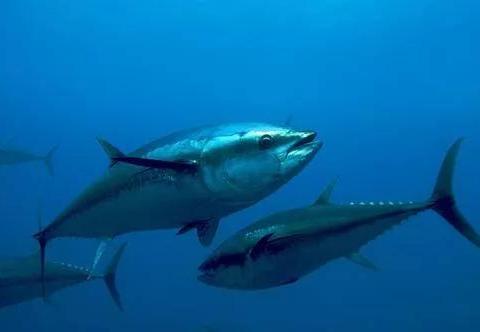 印度洋上的渔业大户,竟然不是印度?