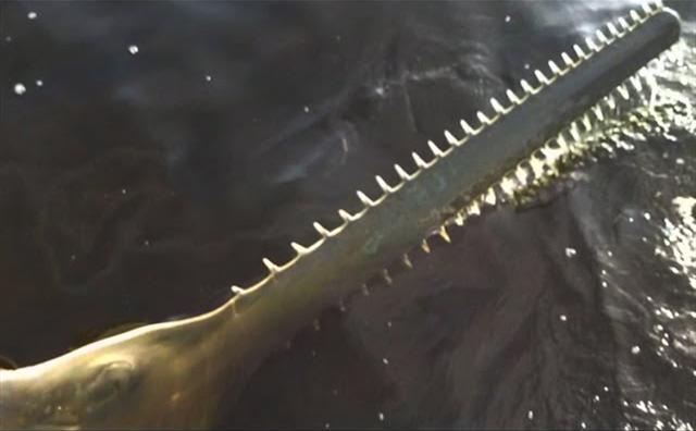 男子在河中捕鱼发现奇怪锯齿刀,打捞上来查看,庆幸自己好运气
