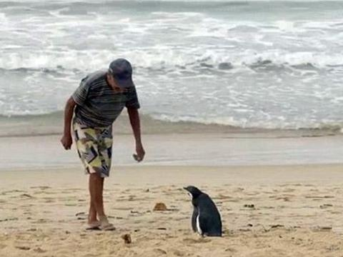 老渔民救了一只可怜的企鹅,后者从此常年都跋涉数千里看望他
