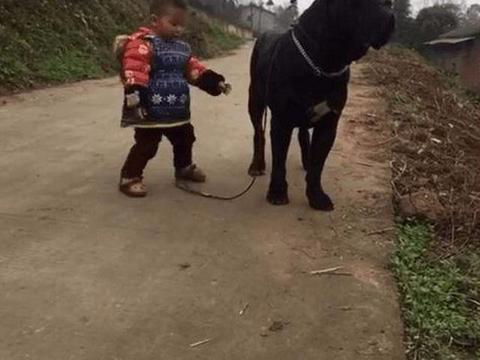 小主人遛狗惹人争议,一看到这条狗网友都被吓了一跳
