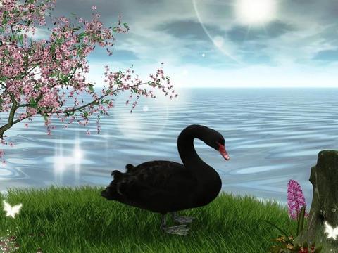 """新冠肺炎疫情:""""黑天鹅""""还是""""灰犀牛""""?该如何应对?"""