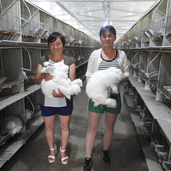 【决战决胜·四逐四准走基层】建立利益联结机制发展兔产业|普安县镇海区东西部扶贫协作的启示