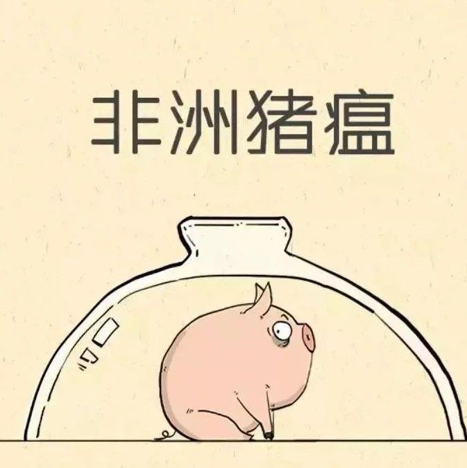 湖南一邻省发生非洲猪瘟疫情!猪肉能吃吗?会感染人吗?权威解答来了!