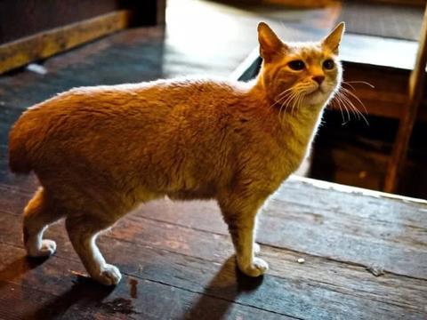 国外一猫咪当了20年名誉镇长,在职期间只管吃喝,居民却很高兴