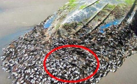 """台风过后,海边搁浅了一艘""""烂木船"""",渔民走近一看不对劲"""