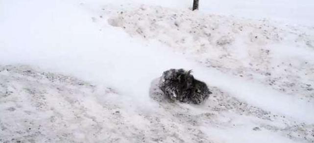 女孩雪堆发现一团毛球,仔细一看,她心都要碎了!
